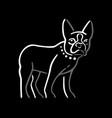dog isolated on black background vector image