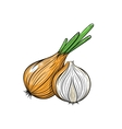 onion on white background vector image