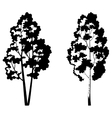 Trees birch and symbolic silhouette vector image