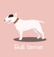 bull terrier dog cartoon graphic design vector image