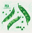 digital detailed line art color pea vector image