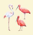 watercolor ibis and flamingo set vector image