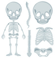 Human skeleton for young kid vector image