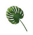 palm leave jungle leaf set isolated on vector image