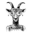 hand drawn goat hipster vector image vector image