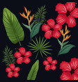 hibiscus leaf palm tropical wild vector image