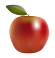 red apples with green leave vector image