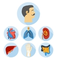 Flat design icons of human anatomy vector image