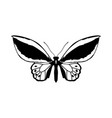 beautiful butterfly silhouette vector image