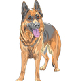 German shepherd vector image