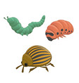green and pink caterpillar colorado potato beetle vector image