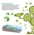 underwater algae seaweed elements vector image