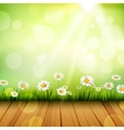 Spring Background With Daisies vector image vector image