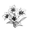 Black and white sketch of clematis flowers vector image