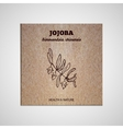 Herbs and Spices Collection - Jojoba vector image