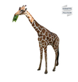 Giraffe polygon vector image