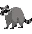 Adult funny raccoon vector image