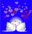 two swans to fall in love vector image