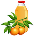 Fresh oranges and juice vector image