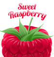 Poster sweet raspberry vector image