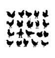 Big collection of cock and hen s black silhouettes vector image