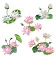 Vintage Waterlily Flowers Bouquete Set vector image vector image