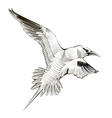 line seagull engraving vector image