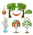 set of summer plants in gardening concept apple vector image