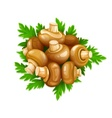 Mushrooms champignons with vector image vector image
