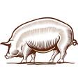 pork pig hand drawing vector image
