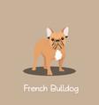 french bulldog pet cartoon standing design vector image