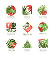 collection of geometric tropical logo with leaves vector image