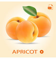 set of three fresh apricots with leaf vector image