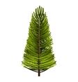 tree plant pine christmas vector image