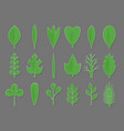 Set of green paper flower and tree leaves isolated vector image