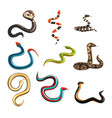 colorful collection of various snakes vector image