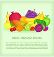 fruits concept organic cartoon style vector image