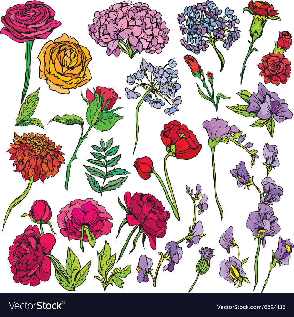 Flowers set 380 vector