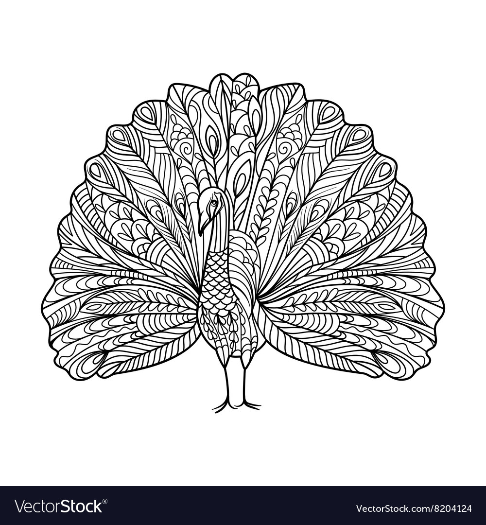 Peacock bird coloring book for adults vector
