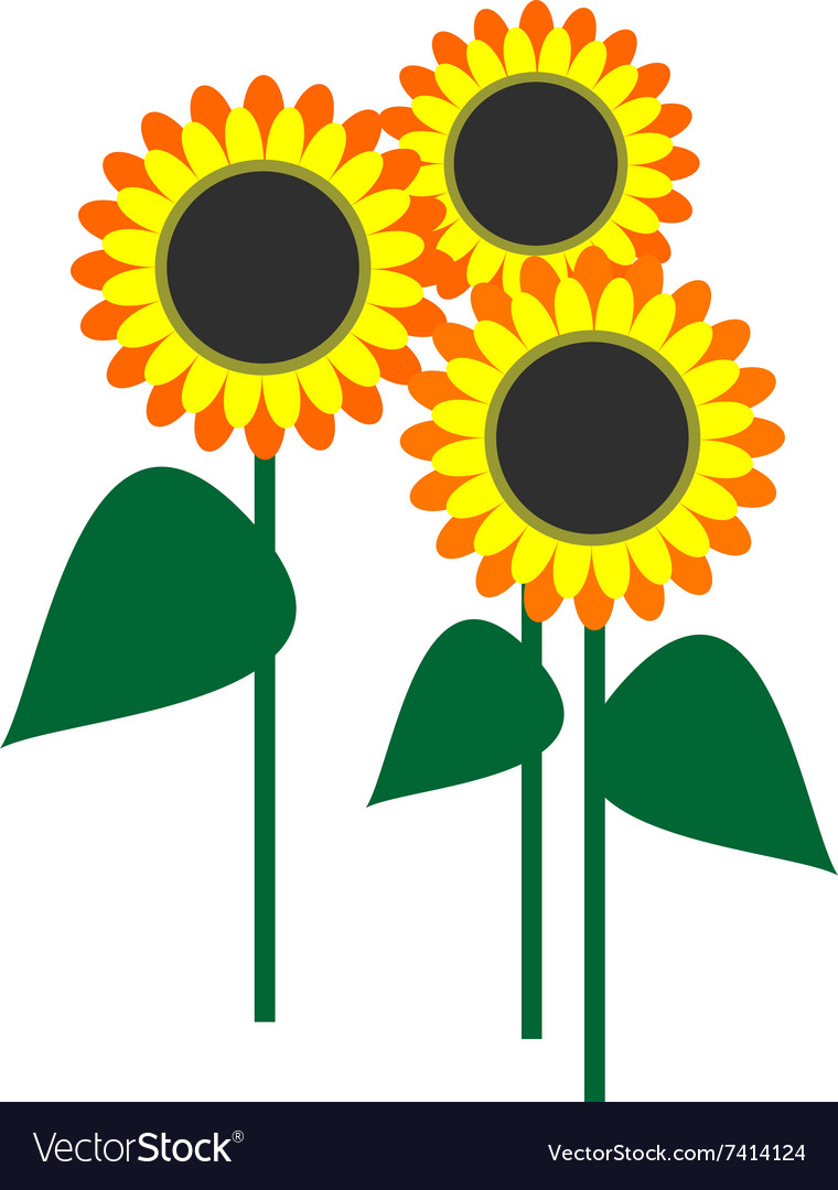 Sunflowers with leaves vector