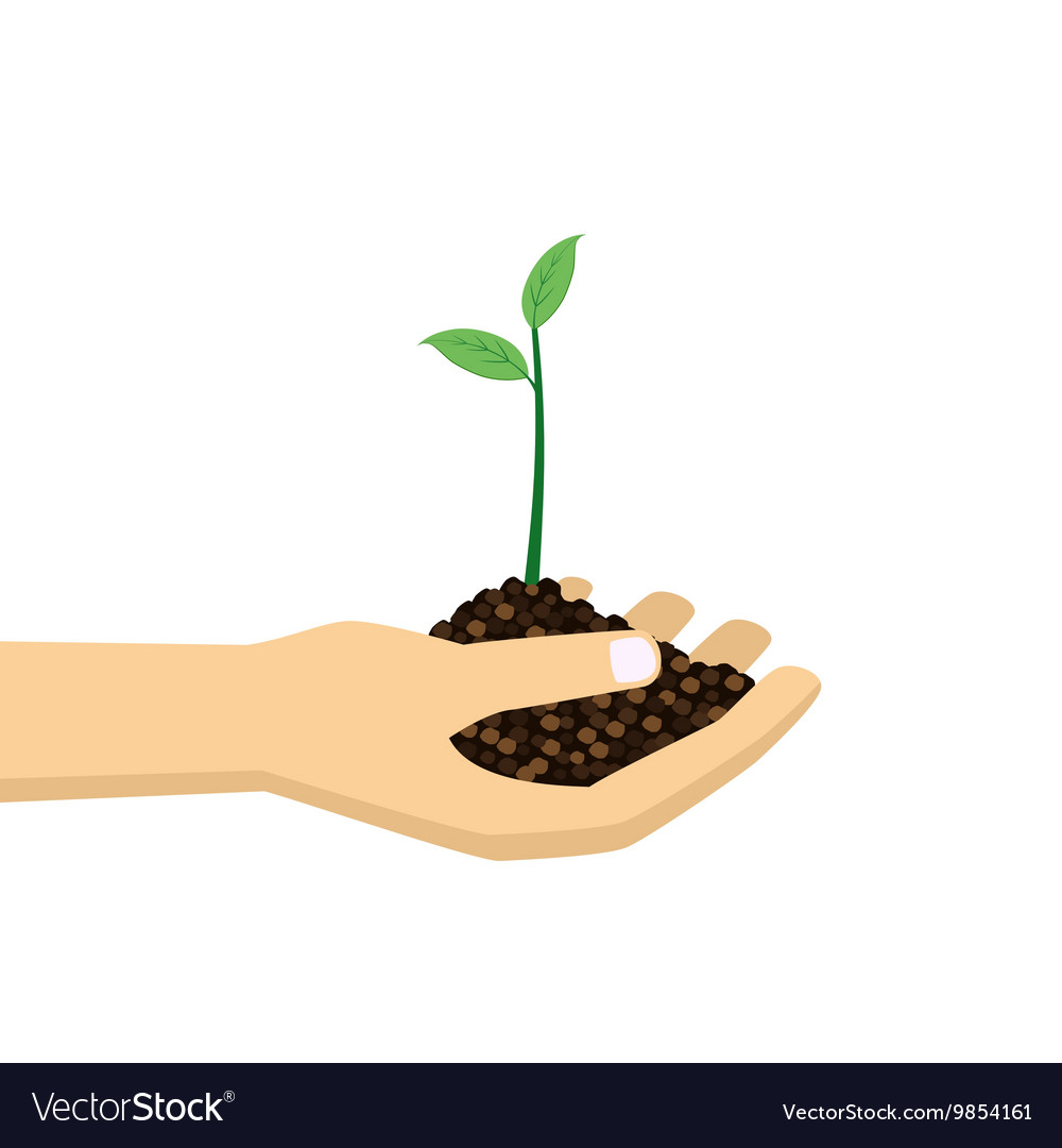 Hand holding young plant vector