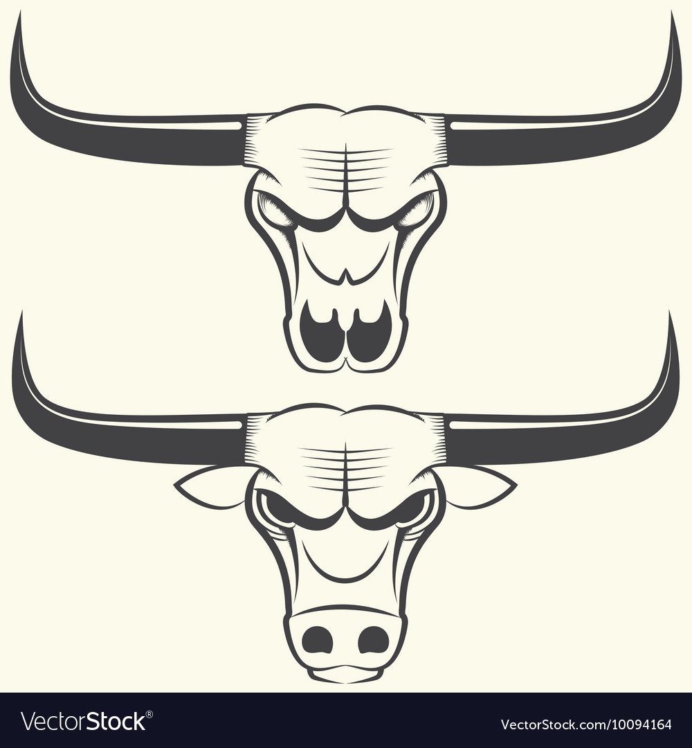 Bull s head and skull vector