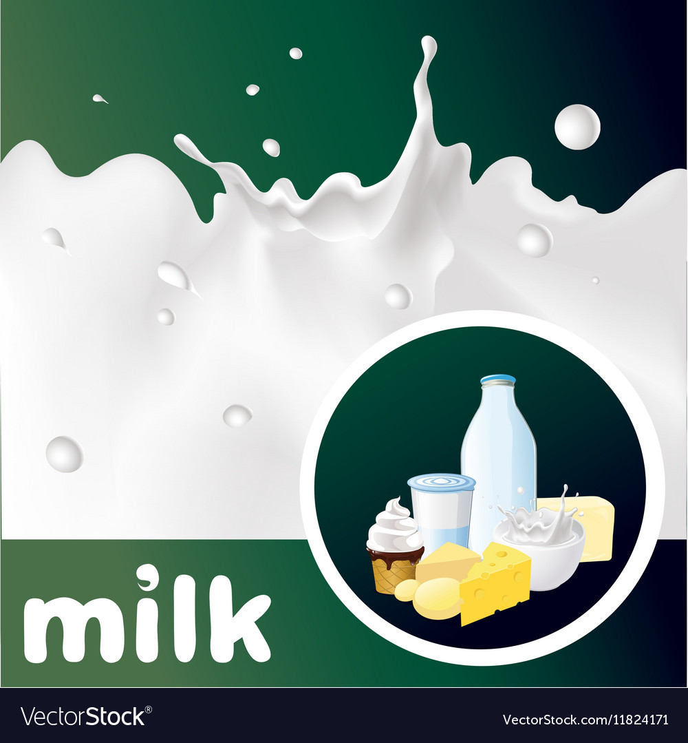 Milk design with splash cheese yogurt and diary vector