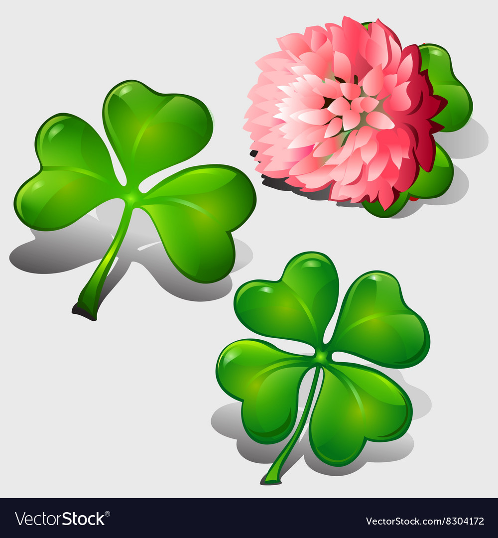 Clover leaves and pink flower vector