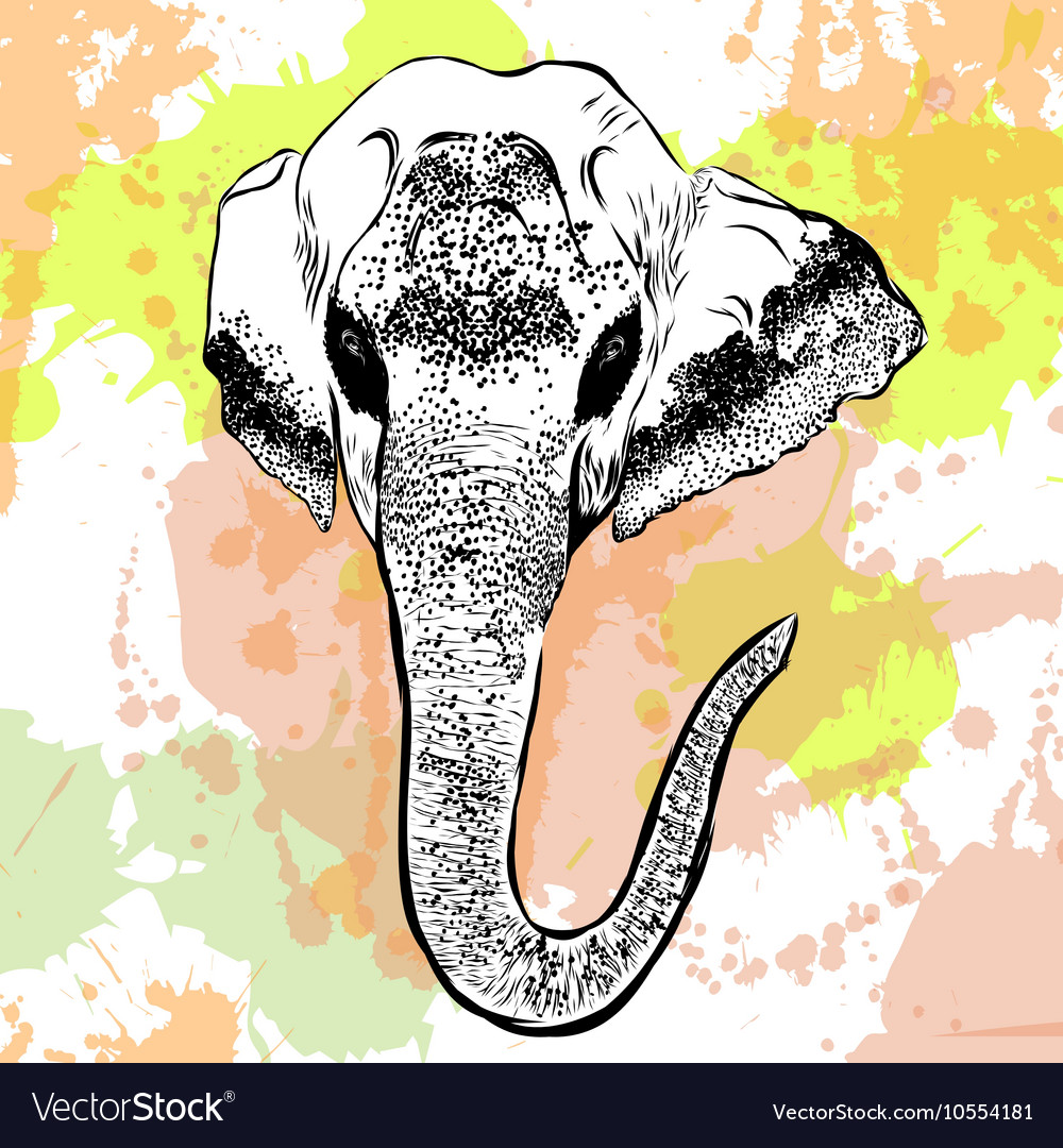 Watercolor elephant portrait on white background vector