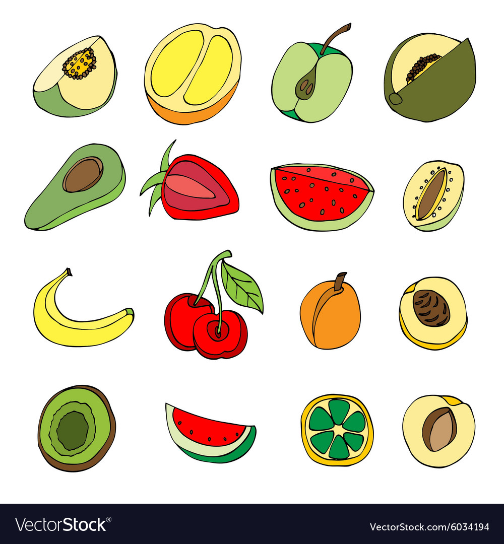 Many fruits vector