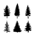set of black silhouettes of pine trees on white vector image