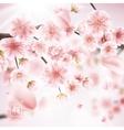 Cherry blossom realistic sakura EPS 10 vector image