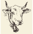 Cow head with bell dutch cattle breed drawn sketch vector image