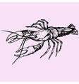 crayfish lobster vector image